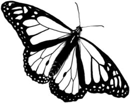 Butterfly Clan Symbol Drawing